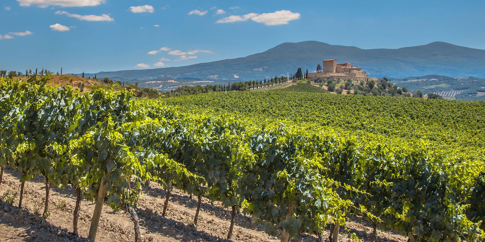 La Rioja, much more than wine
