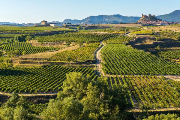 Vineyards in La Rioja