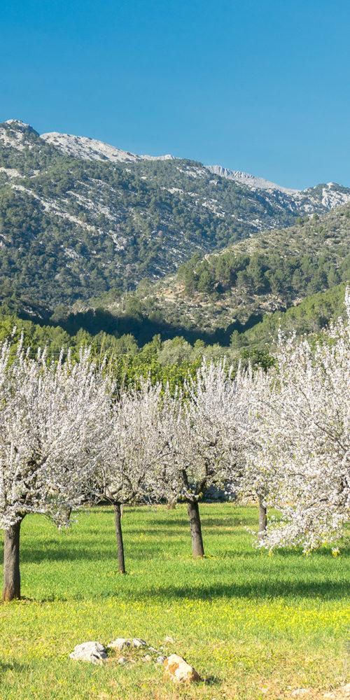 Sierra de Tramuntana Mallorca